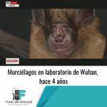 Murciélagos vivos en laboratorio de Wuhan, hace 4 años.